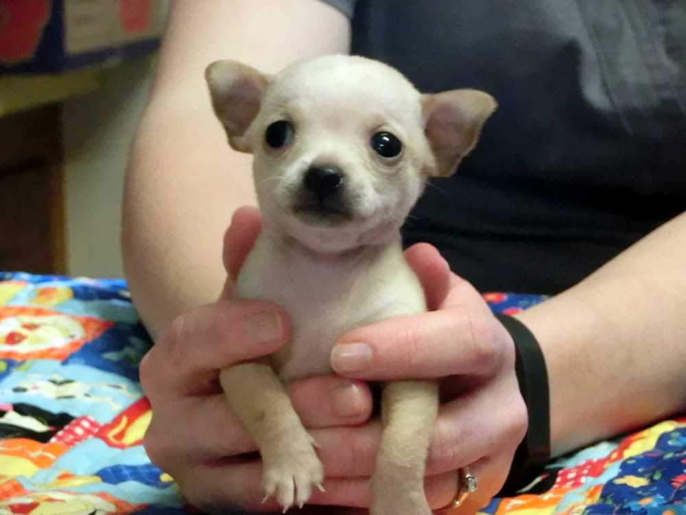 One of our puppy patients at Mountain Valley Veterinary Hospital